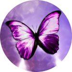 Leptir kao simbol mog životnog puta